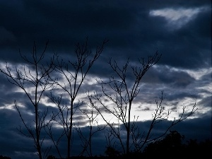 trees, clouds, branch pics