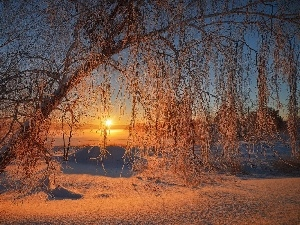 trees, sun, glamour, Sloping, east, snow, White frost