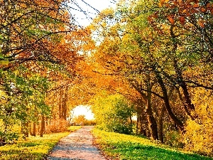 Autumn, viewes, Path, trees