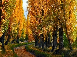 Path, Poplars, autumn