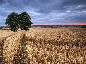 trees, Sky, cereals