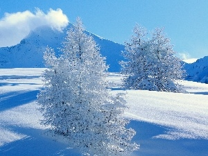 snow, Sky, trees, viewes, Mountains
