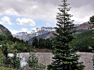 Mountains, Spruces, lake
