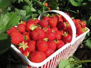 strawberries, leaves, basket, Mature, White