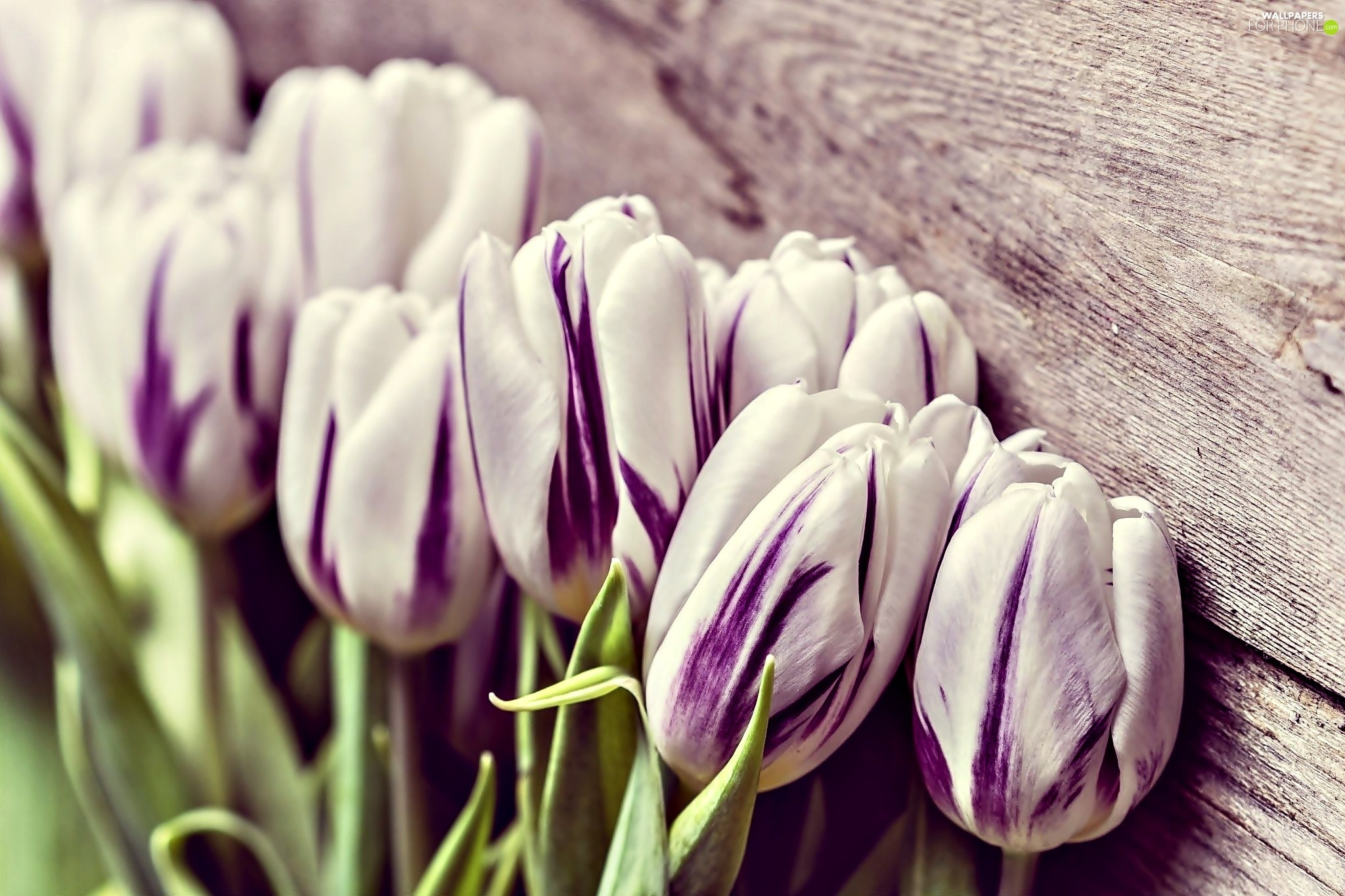 white, Tulips, board, purple - For phone wallpapers: 2048x1365