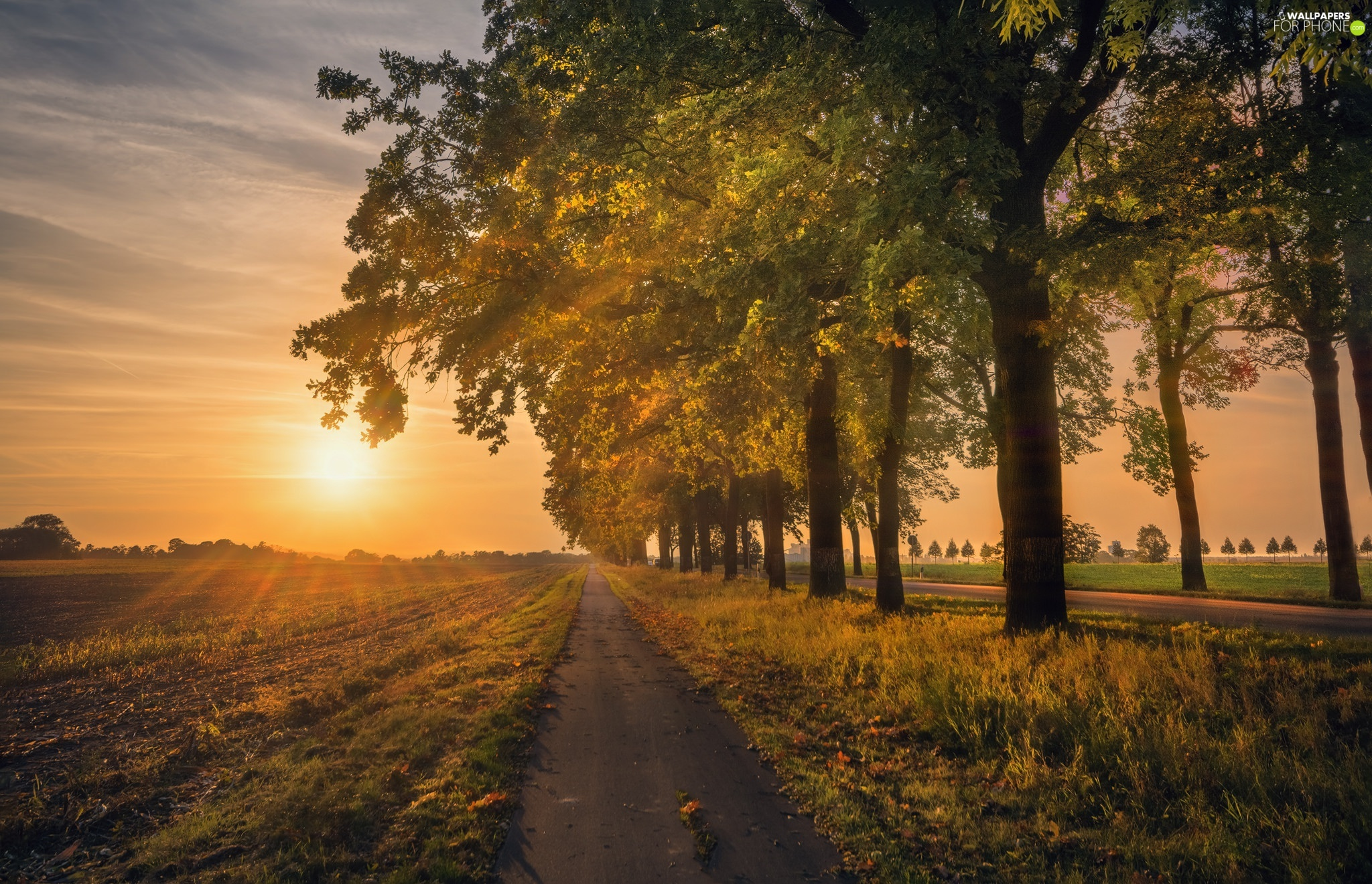 field, autumn, viewes, Great Sunsets, trees, Way