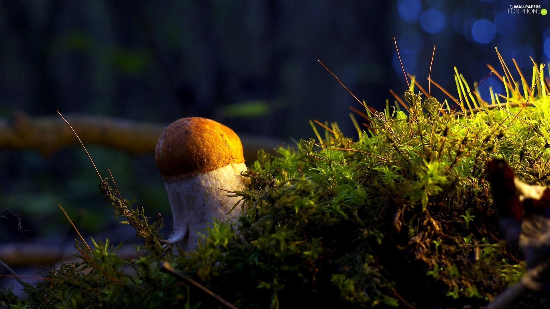 mushroom wallpaper phone - photo #40