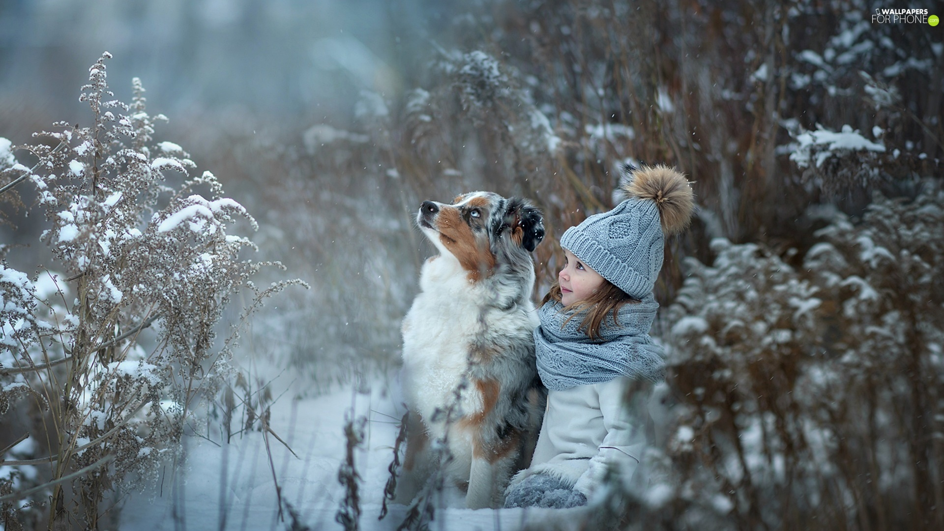 girl, Australian Shepherd, winter, Kid, dog, Plants, snow