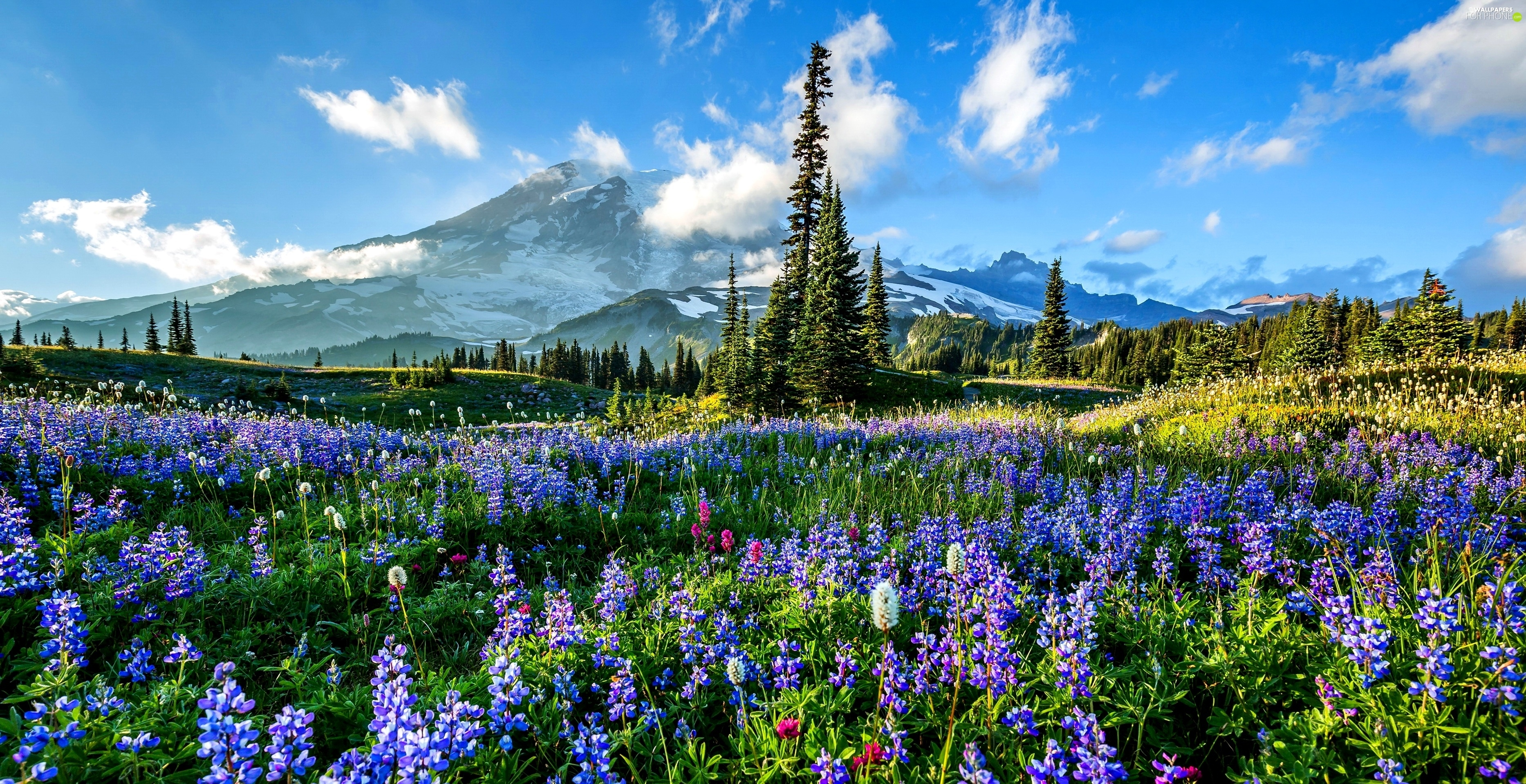 meadow mountains woods flowers for phone wallpapers