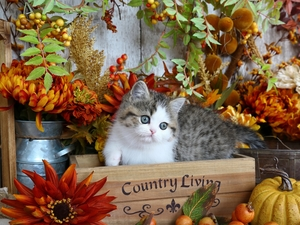 cat, small, Autumn, decor, box, kitten