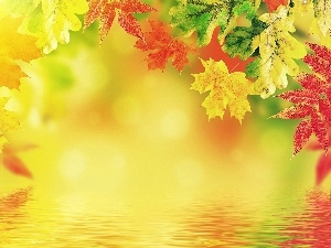 autumn, color, Leaf