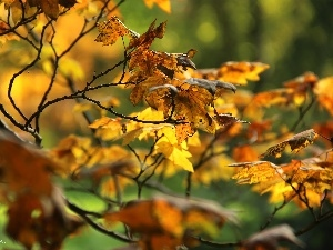 autumn, Yellow, Leaf