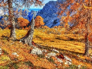 Mountains, viewes, autumn, trees