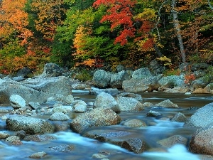 River, forest, autumn, Stones