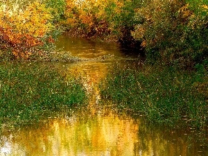 trees, water, autumn, viewes