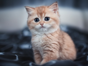 fuzzy, background, ginger, kitten, small