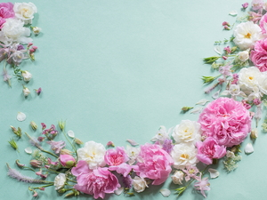 Flowers, White, Blue, background, Peonies, Pink