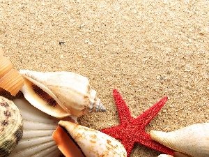 Beaches, color, Shells