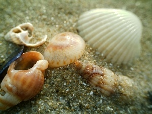 Shells, Beaches