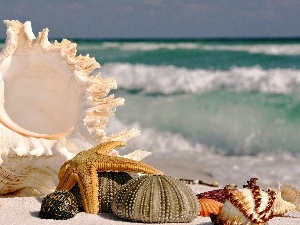Beaches, Shells, star