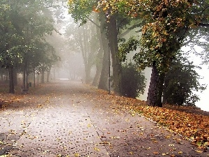 viewes, Pavement, Leaf, trees, Park, bench, Fog