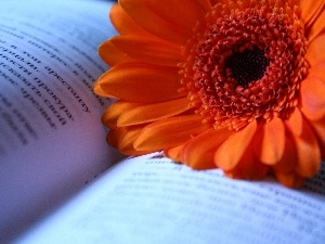 Book, Orange, Gerbera