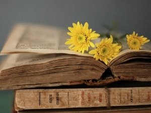 Book, Yellow, gerberas