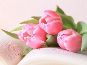 Book, Pink, Tulips