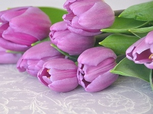 bouquet, purple, Tulips