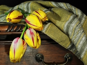 color, overlay, box, Tulips