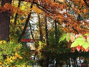 color, Park, bridge, lake, Leaf, autumn