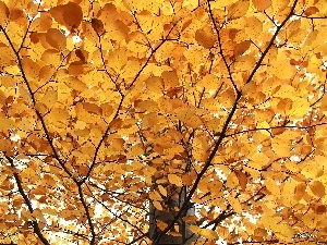 o, trees, Bronze, Leaf, yellow, viewes