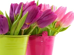 Bouquets, color, Buckets, tulips