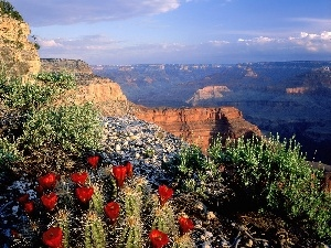 canyon, VEGETATION, Cactus, Mountains