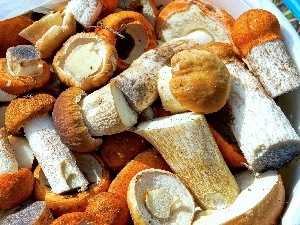 ceps, All, host