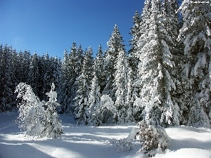 Christmas, forest, winter