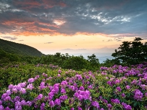 Meadow, clouds, rhododendron, Mountains