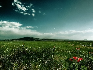 Meadow, papavers, clouds, grass