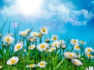 clouds, sun, daisies, grass, Meadow