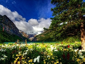 color, Flowers, lake, Park, Mountains