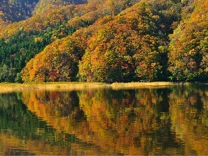 color, Leaf, forest, water, autumn
