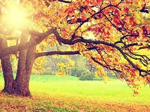 viewes, color, autumn, Leaf, sun, trees, Park, rays