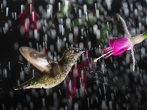 Rain, humming-bird, Colourfull Flowers