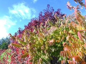 different, Gardens, White, Bush, autumn, Colours, clouds