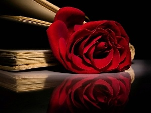 red hot, Books, composition, rose