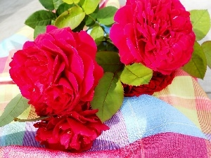 composition, roses, tablecloth