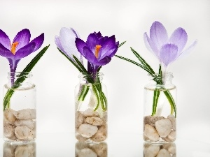 crocuses, Bottles, pebbles