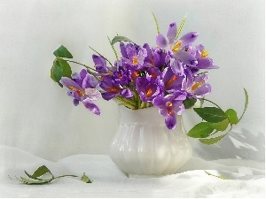 crocuses, jug, purple