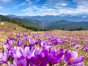 Mountains, car in the meadow, Houses, Spring, woods, crocuses