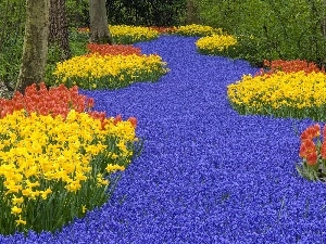 Daffodils, Tulips, many, flowers, forest